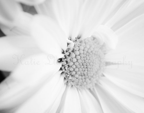 Daisy in Black & White, Two - 11x14 Fine Art Flower Photography Print - Feminine Nursery or Bedroom Home Decor, Soft and Bright Still Life