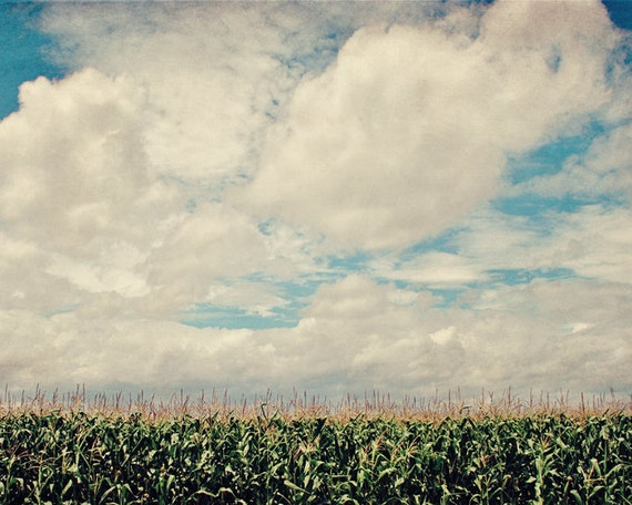 Field of Dreams - 16x20 Fine Art Photography Print - Kansas country corn field and cloud filled sky