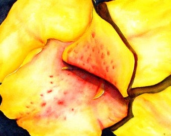Voracious, Yellow Canna Flower, 15 x 22 Original Watercolor, Framed 18 x 24, FREE Shipping