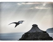 """Taking off . photograph - dreamy spring wall art, office or home decor 11.5""""x 8"""""""
