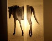 Wild Horse Photolamp