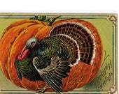 Thanksgiving  Greetings Vintage Postcard  with Turkey and Pumpkin