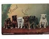 Vintage Dogs postcard  Six Canines, Contemplation Nice German Postcard