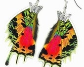 Real Butterfly Wing Earrings (Urania Ripheus HW - E053) - Buy 2 Get 1 Free