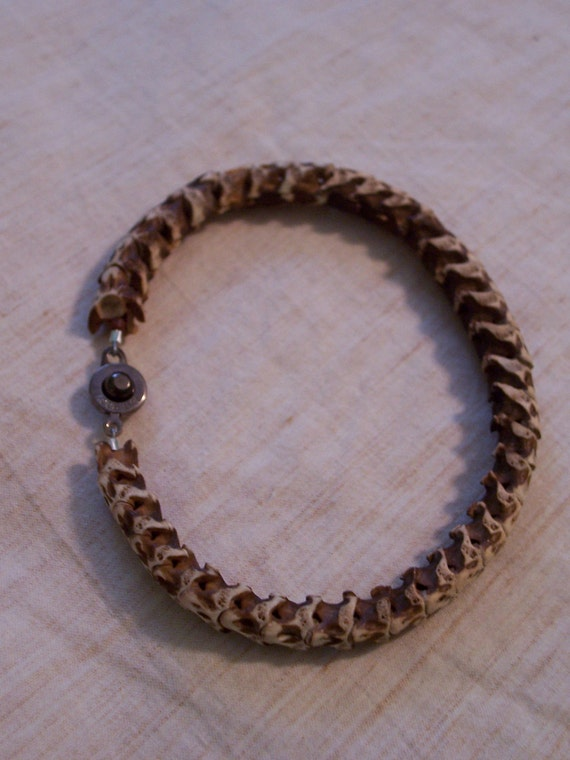 snake bone bracelet. snake specimen. natural curiosity. bone jewelry.