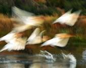 River Angels - 8x10 Signed Fine Art Photograph
