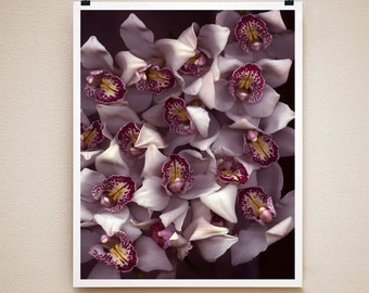 ORCHID - 8x10 Signed Fine Art Photograph