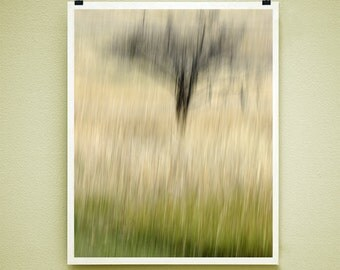 PLUM TREE - 8x10 Signed Fine Art Photograph