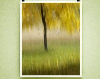 SWEET TREE - 8x10 Signed Fine Art Photograph
