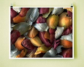 MIXED ONION SKINS - 8x10 Signed Fine Art Photograph