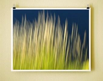 RIVER GRASS - Signed Fine Art Photograph 8x10