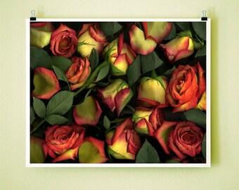 ORANGE ROSES - 8x10 Signed Fine Art Photograph