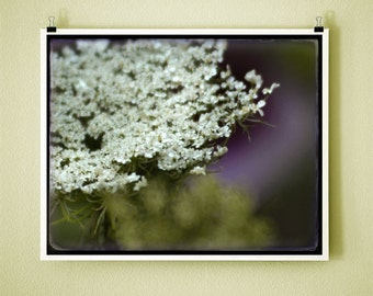 LACE BLOSSOM - 8x10 Signed Fine Art Photograph