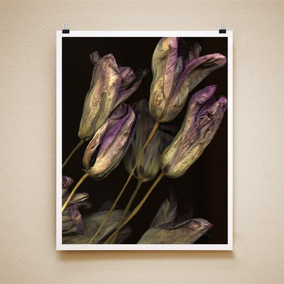 DRIED TULIPS - 8x10 Signed Fine Art Photograph