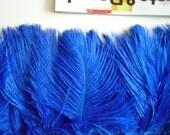 DELICATA PLUMES  Fringe , Electric, Cobalt Blue /  2007 / BESTSELLER
