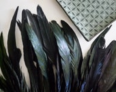 COQUE TAIL FEATHERS Loose / Iridescent Black/ 181 / On Sale