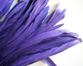 RUSTICA COQUE TAIL Feathers , Deep Violet Blue, Iris   / 1302