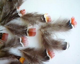 PHEASANT FEATHERS,  Natural,  / 2523