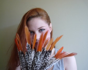 LADY AMHERST Pheasant  Feathers w Orange tips / 10 plumes/  944