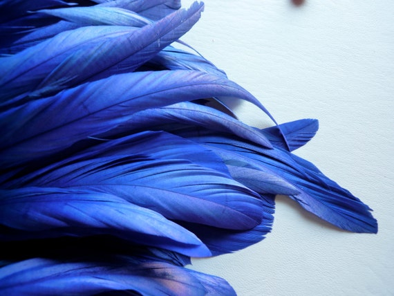 COQUE Tail Feathers  Loose / Cobalt, Duke Blue /  199