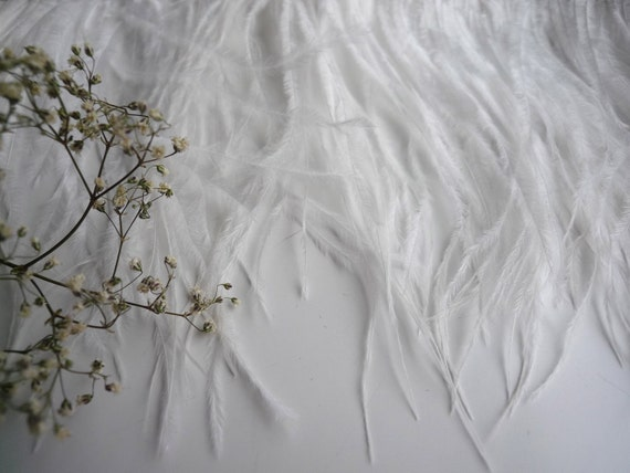 OSTRICH FEATHER FRINGE  Eggshell  / 345