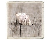 Seashell Photograph Banded Tulip Shell Rustic Beach Ocean Sea Spiral Striped Nature Vintage Style Fine Art