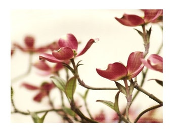 Fine Art Pink Floral Photograph Touch Of Spring Flower Dogwood Raspberry Dreamy Girly Nature Garden Blossoms