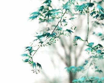 Dreamy Tree Photograph Whispers Blue Maple Leaves Teal Turquoise Surreal Ethereal Fine Art Nature