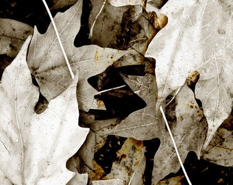 Leaf Fine Art Photograph Rusty Leaves Sepia Black White Nature Decor Wall Home Rustic Minimalist