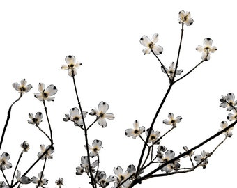 Gray Flowers Cottage Chic Of Flowering Moon Neutral Decor Dogwood Botanical Minimalist