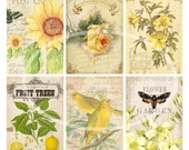 Collage Sheet.....Mellow Yellow--Digital Scrapbooking-Digital Image-Digital Card