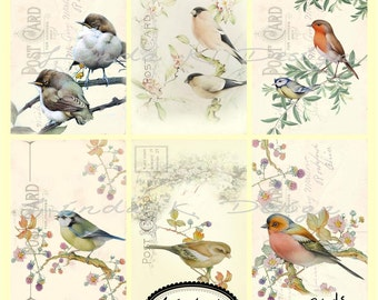 Digital Scrapbooking-Collage Sheet-Digital Image-Digital Card...Elton Birds