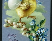 Vintage Easter Postcard - Chick with Forget Me Nots