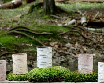 Five birch bark votives with glass inserts, special offer