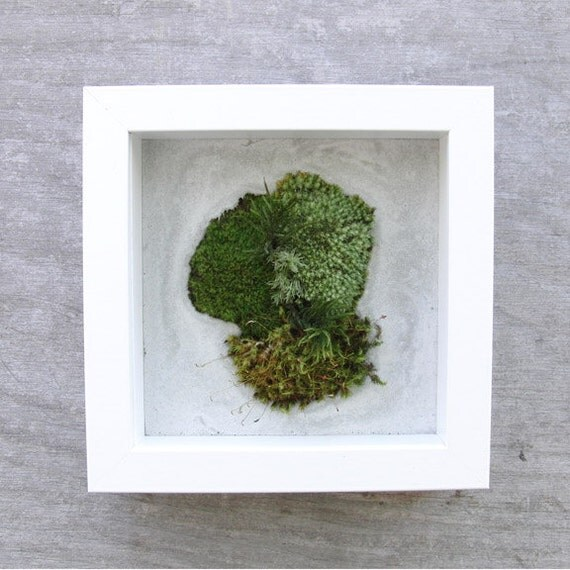 Moss rounds in gray stone