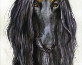 A Little Casanova - Afghan Hound Dog Art Print