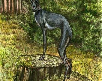 Listen to the trees - Italian Greyhound Art Dog Print
