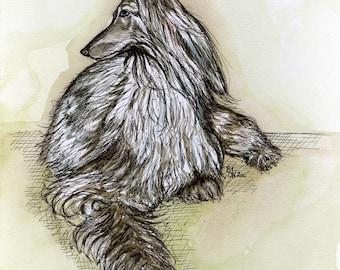Looking Back -  AFGHAN HOUND DOG Print