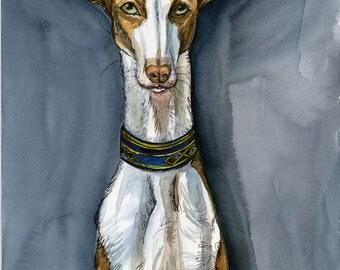 Ibizan Hound Dog Print- 5 x 7 inch