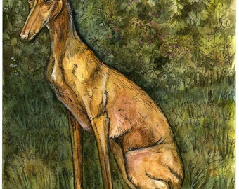 Love to be loved - Pharaoh Hound Art Dog Print