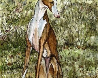 A Little Enchanting - Ibizan Hound Art Dog Print