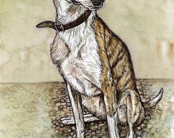 LITTLE BLUE EYE- Greyhound Lurcher Art Print
