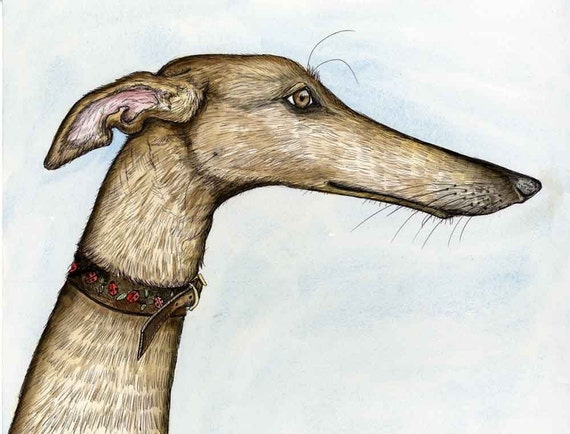 A Little Pleased - Greyhound Art Dog Print