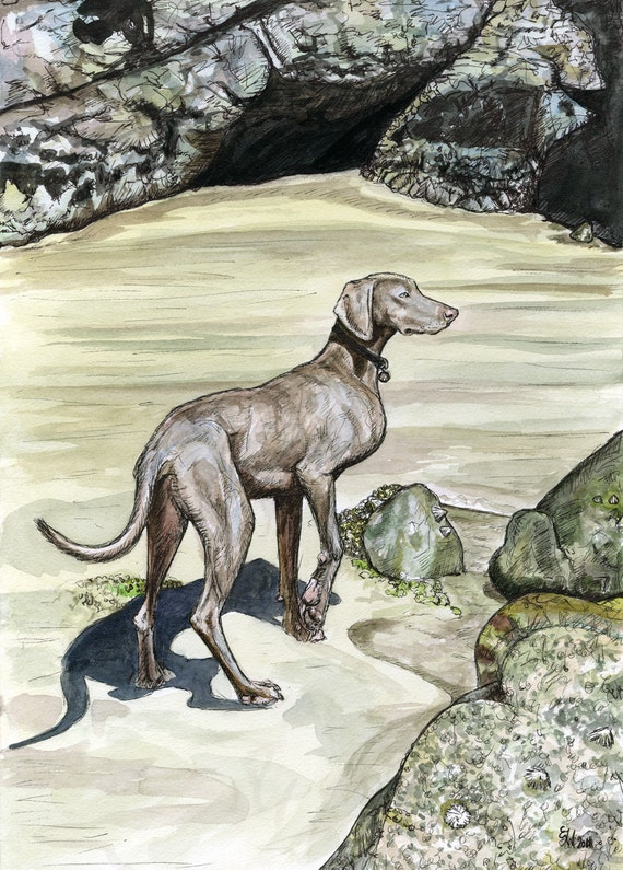 Distant whispers of the Sea - Weimaraner Dog Art Print  - 5 x 7 inch