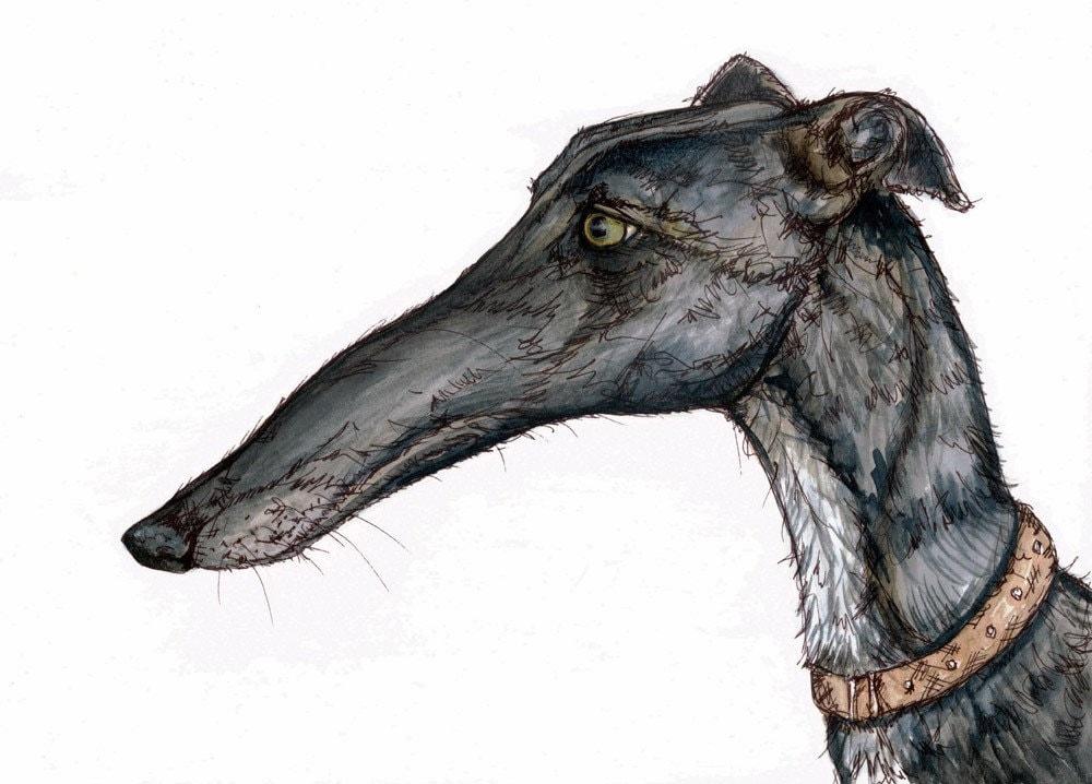 greyhound canada shipping: