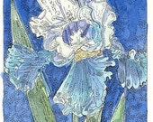 Blue and White Iris ACEO from Theodora