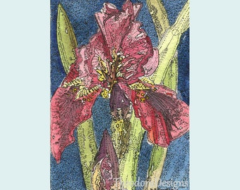 Dark Reddish Iris ACEO from Theodora Winter Lament