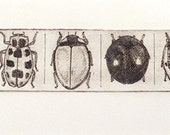 beetles in line I