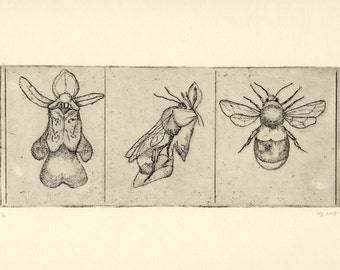 bee and orchid buff