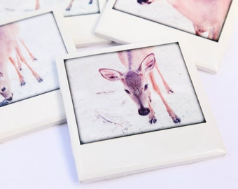 Deer Coasters - Florida Key Deer - Collectible Ceramic Drink Coasters, Set of 4